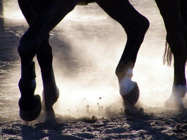 Конь Ликумс