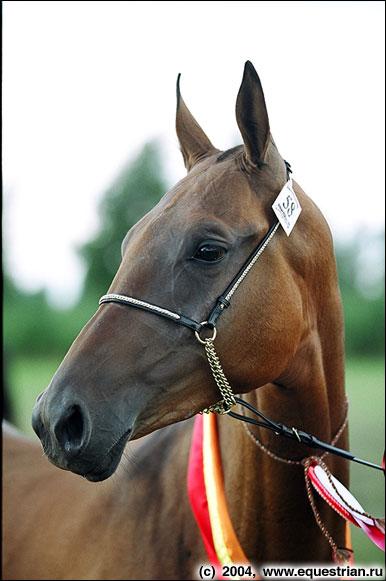 http://www.equestrian.ru/photos/photoreport2004/teki/a_e7d095.jpg
