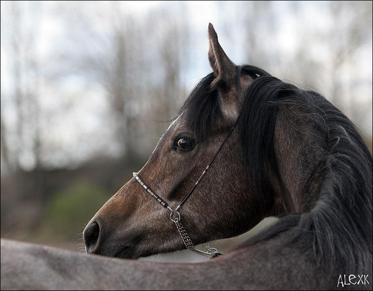 http://www.equestrian.ru/photos/photoreport2005/lenexpo/a_2df76e.jpg