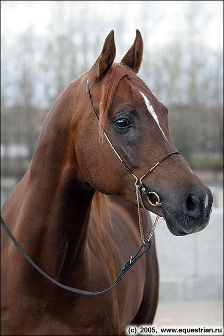 http://www.equestrian.ru/photos/photoreport2005/lenexpo/a_5422f8.jpg