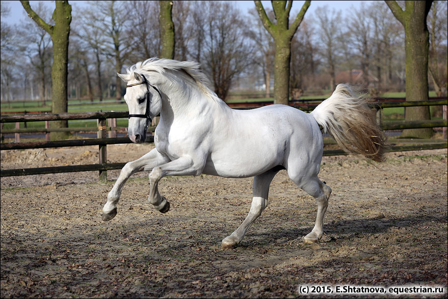 Nijhof Stables/ ������� Clinton