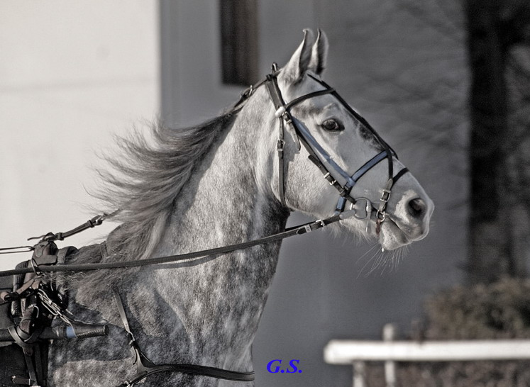 http://www.equestrian.ru/photos/user_photo/2007/0197c6e3.jpg
