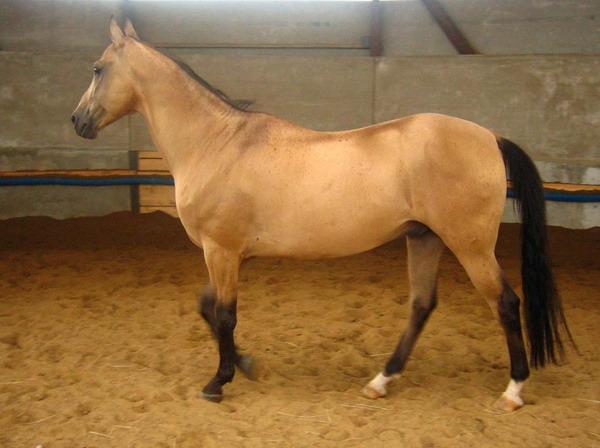http://www.equestrian.ru/photos/user_photo/2007/110917d7.jpg