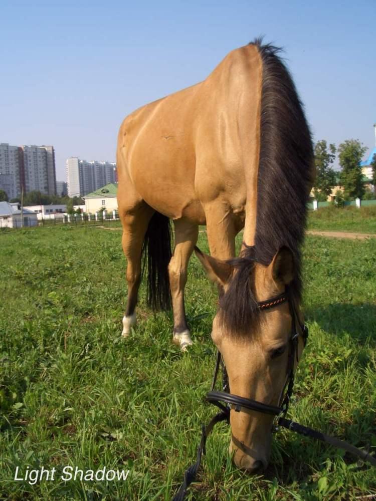http://www.equestrian.ru/photos/user_photo/2007/171d8d9d.jpg