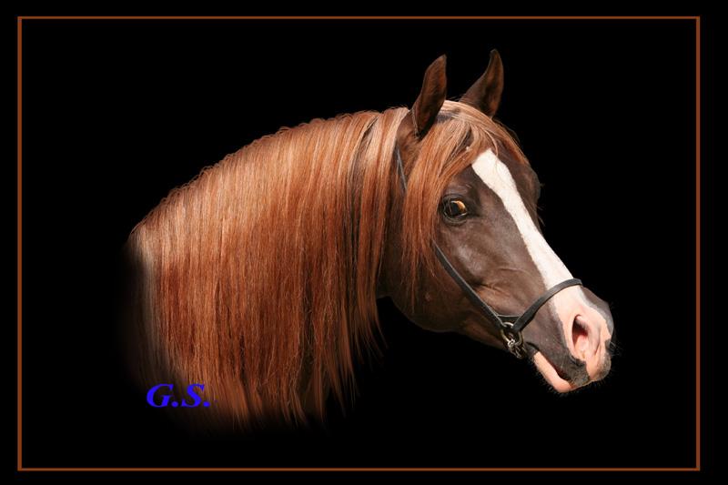 http://www.equestrian.ru/photos/user_photo/2007/17ad6ac5.jpg