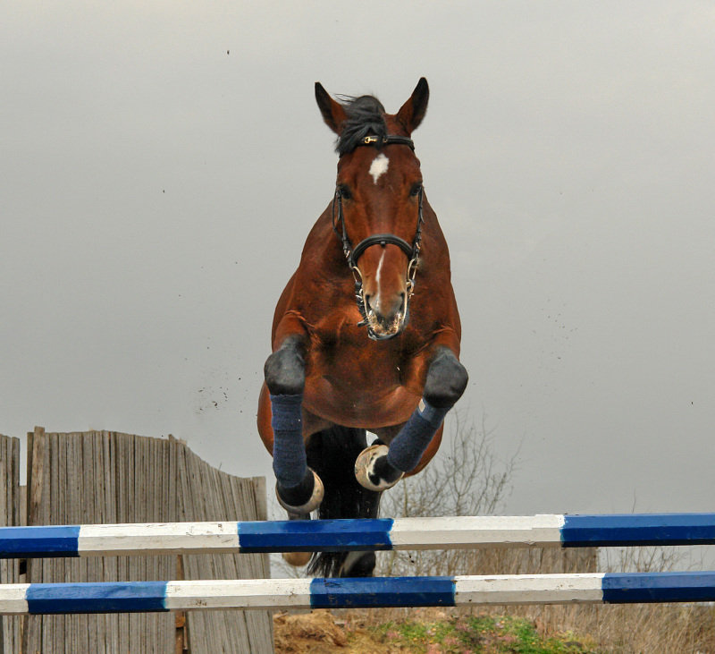 http://www.equestrian.ru/photos/user_photo/2007/4c9d31d4.jpg