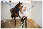 Во сне мыть коня