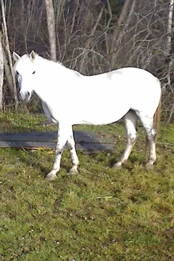 http://www.equestrian.ru/photos/user_photo/2007/62f3fbbb.jpg