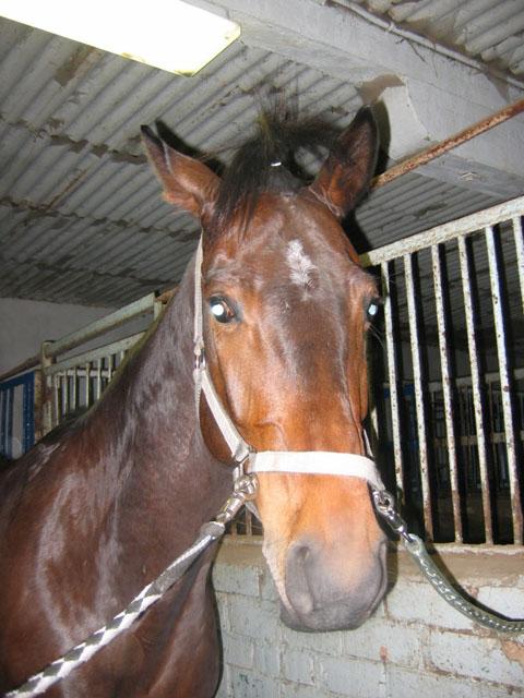 http://www.equestrian.ru/photos/user_photo/2007/75831a83.jpg