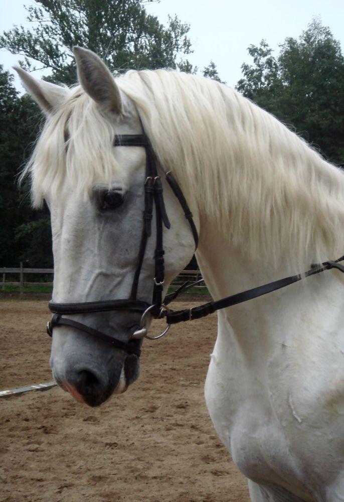 http://www.equestrian.ru/photos/user_photo/2007/7b77327c.jpg