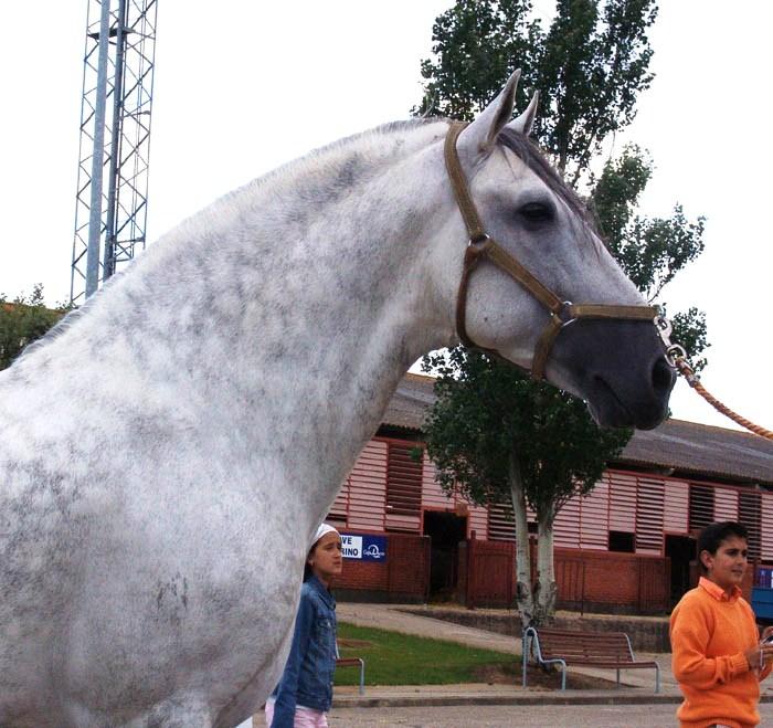 http://www.equestrian.ru/photos/user_photo/2007/80cddc43.jpg