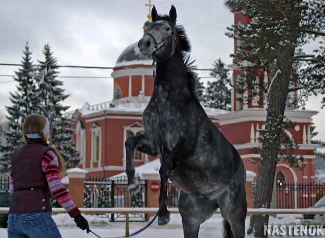 http://www.equestrian.ru/photos/user_photo/2007/82ab30e7.jpg
