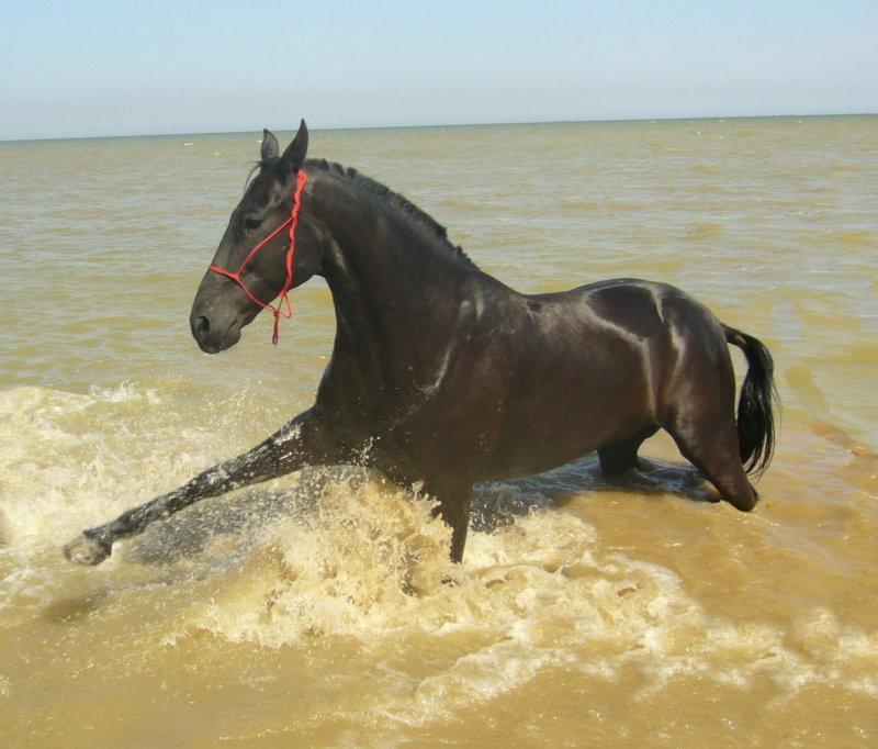 http://www.equestrian.ru/photos/user_photo/2007/ad711b65.jpg