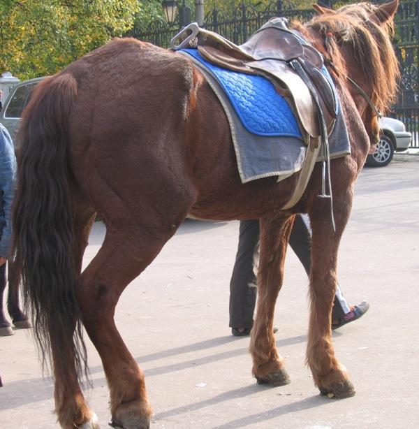 http://www.equestrian.ru/photos/user_photo/2007/b151d07c.jpg