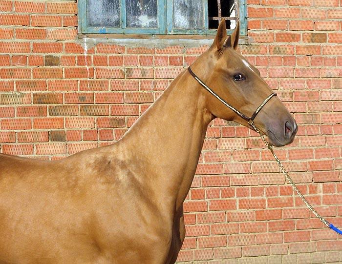 http://www.equestrian.ru/photos/user_photo/2007/ddcd0df1.jpg