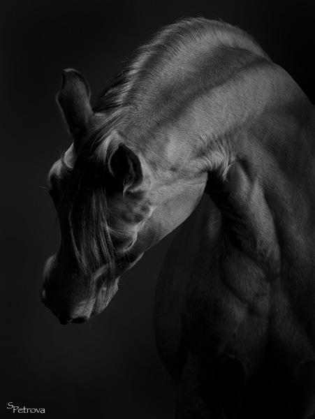 http://www.equestrian.ru/photos/user_photo/2007/f498c5a9.jpg