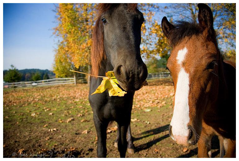 http://www.equestrian.ru/photos/user_photo/2007/fb6dcd41.jpg
