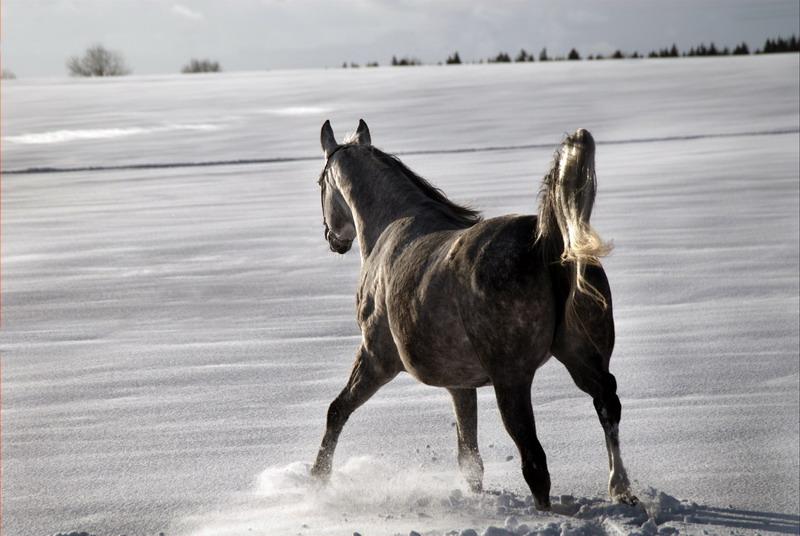 http://www.equestrian.ru/photos/user_photo/2008/01461d88.jpg