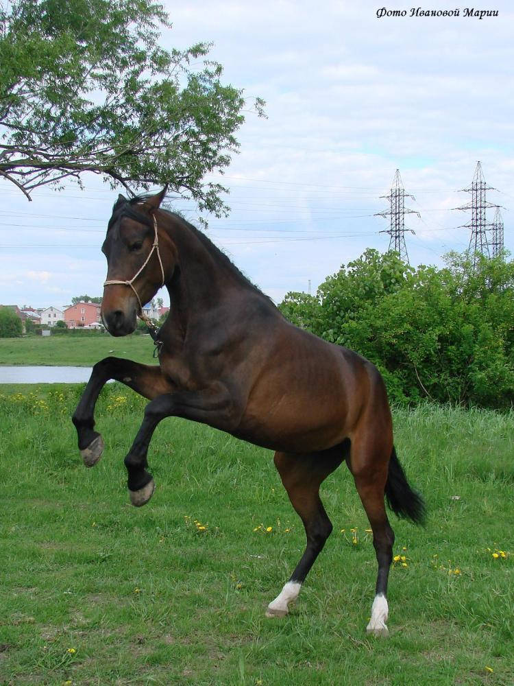 http://www.equestrian.ru/photos/user_photo/2008/039d9cce.jpg