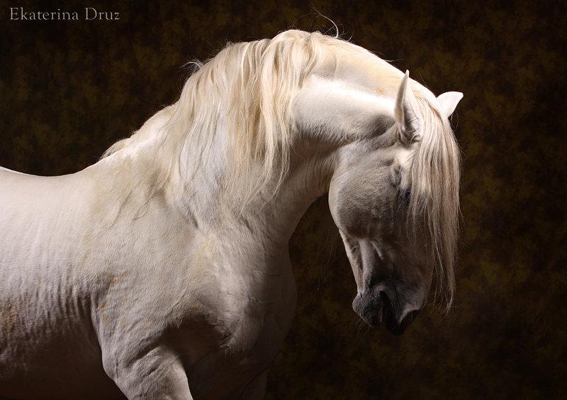 Предлагаем обучение верховой езде, любительские занятия, катание на лошадях для детей и взрослых, а также фото с...