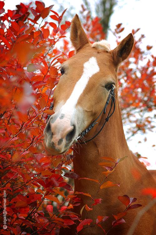 http://www.equestrian.ru/photos/user_photo/2008/09473811.jpg