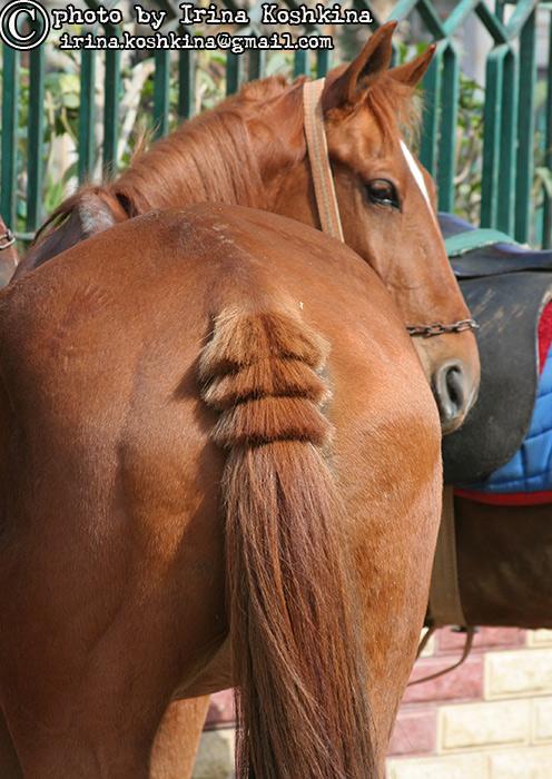http://www.equestrian.ru/photos/user_photo/2008/0ac3f690.jpg