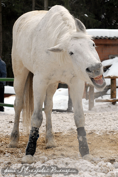 http://www.equestrian.ru/photos/user_photo/2008/11a8be23.jpg