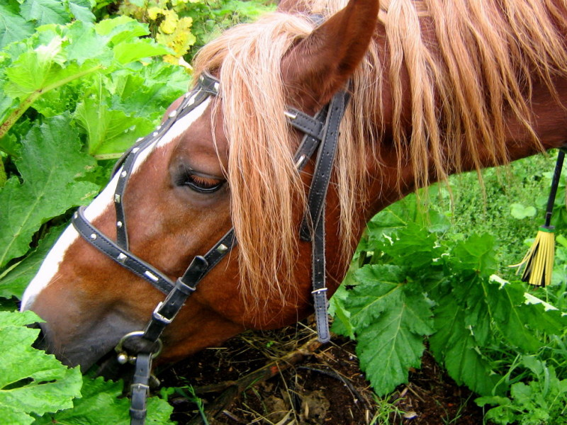 http://www.equestrian.ru/photos/user_photo/2008/19cf7aa1.jpg