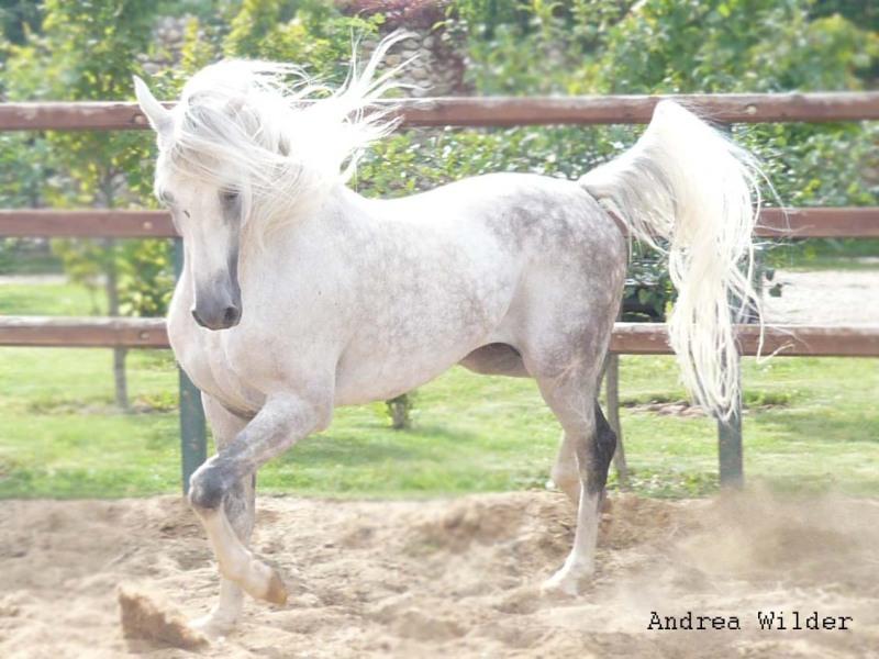 http://www.equestrian.ru/photos/user_photo/2008/1a28598d.jpg