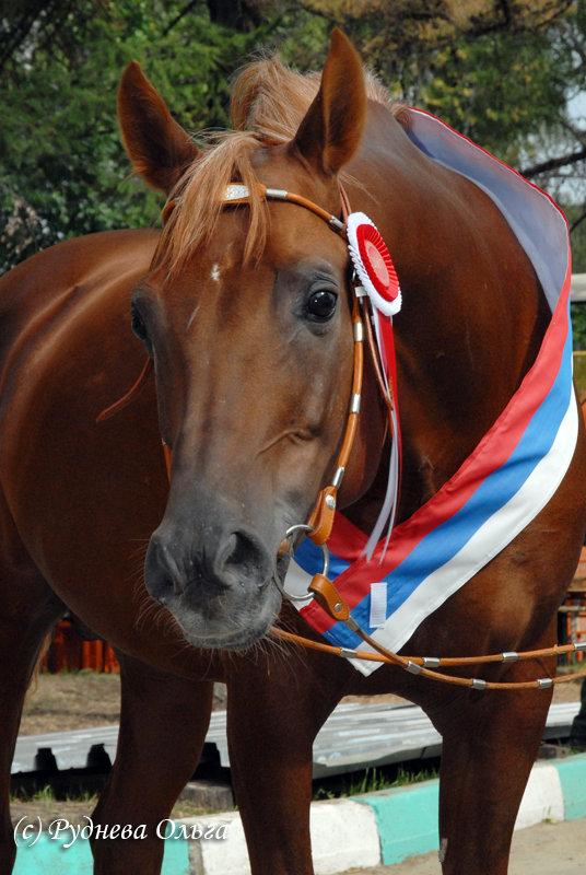 http://www.equestrian.ru/photos/user_photo/2008/34107270.jpg