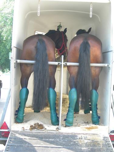 http://www.equestrian.ru/photos/user_photo/2008/3a435c53.jpg