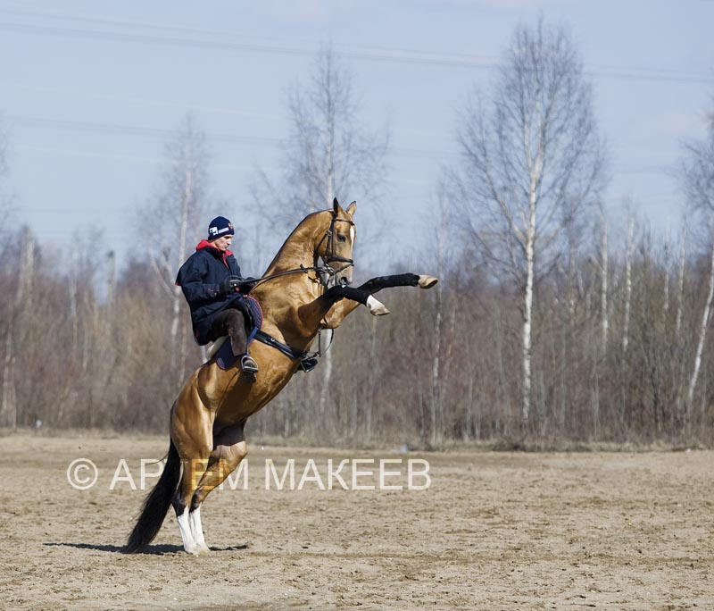 http://www.equestrian.ru/photos/user_photo/2008/3d4225bc.jpg