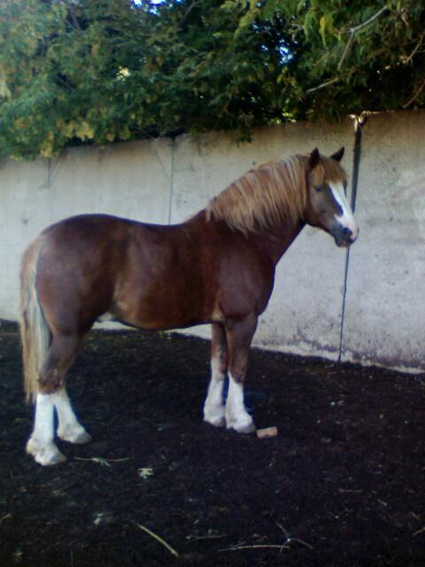 http://www.equestrian.ru/photos/user_photo/2008/3d674232.jpg