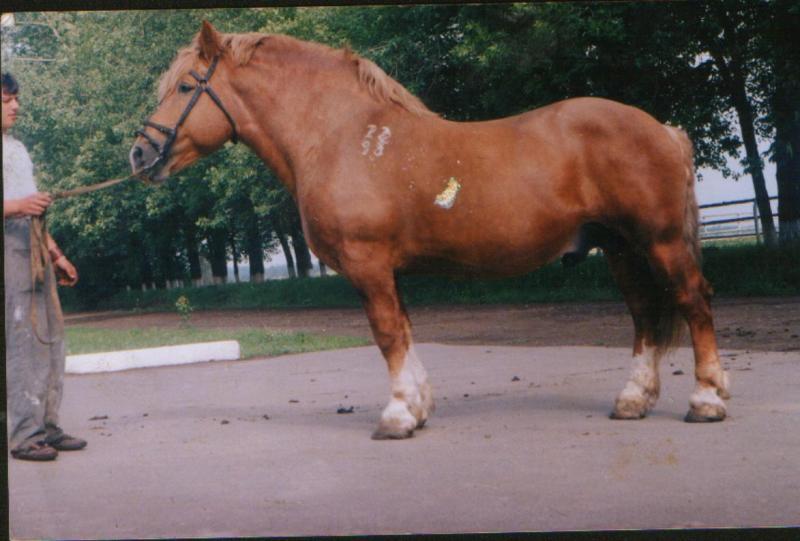 http://www.equestrian.ru/photos/user_photo/2008/3d796b5c.jpg