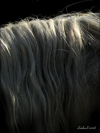 http://www.equestrian.ru/photos/user_photo/2008/455925b2.jpg