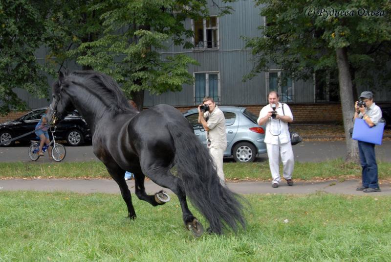 http://www.equestrian.ru/photos/user_photo/2008/474b4dd7.jpg