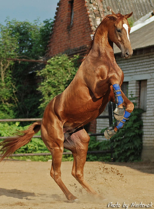 http://www.equestrian.ru/photos/user_photo/2008/56678915.jpg
