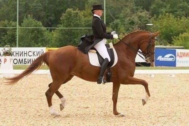 http://www.equestrian.ru/photos/user_photo/2008/579599ee.jpg