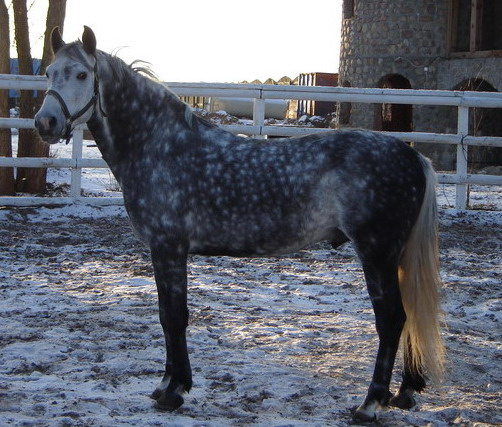 http://www.equestrian.ru/photos/user_photo/2008/6448ca5c.jpg