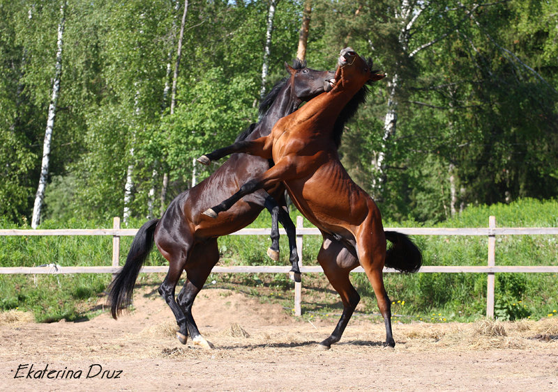 http://www.equestrian.ru/photos/user_photo/2008/6459e7dd.jpg