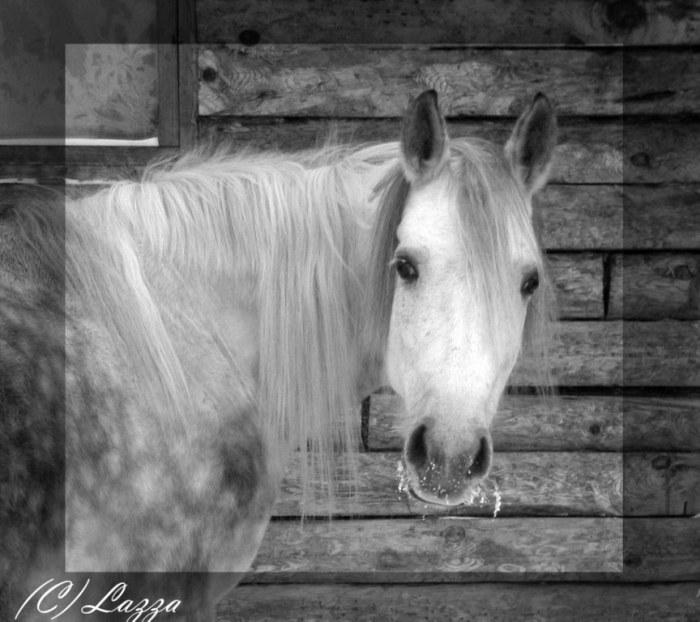 http://www.equestrian.ru/photos/user_photo/2008/6c5526e5.jpg