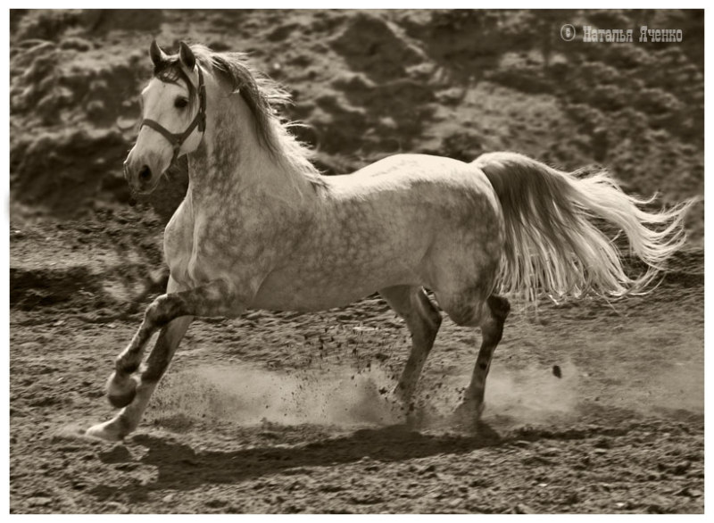 http://www.equestrian.ru/photos/user_photo/2008/77f76626.jpg