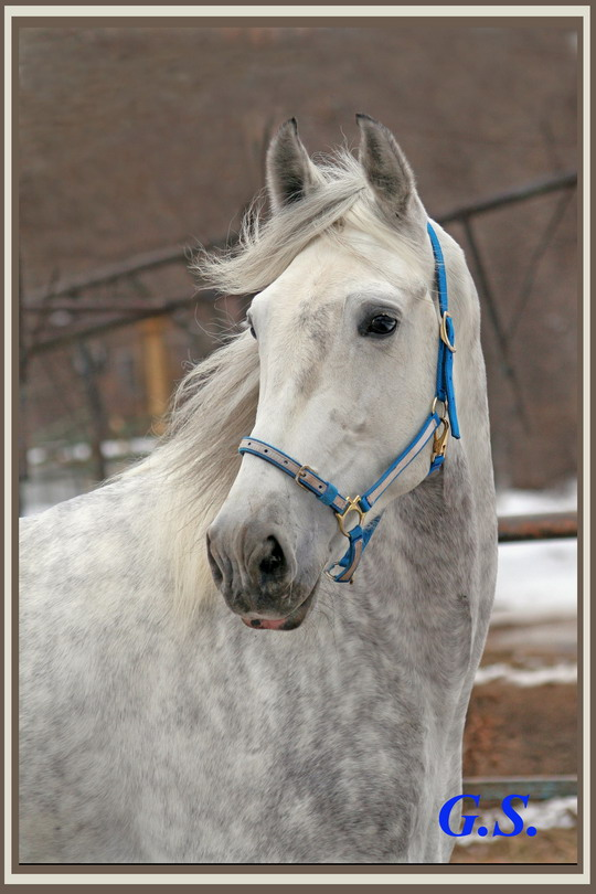 http://www.equestrian.ru/photos/user_photo/2008/78c8014f.jpg