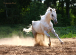 http://www.equestrian.ru/photos/user_photo/2008/7a57d6ec_sm.jpg