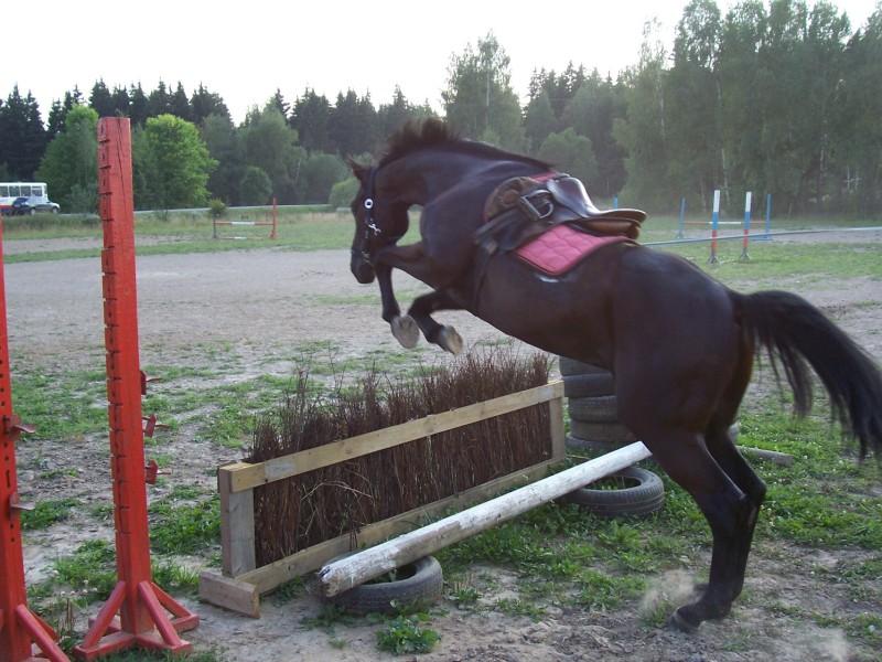 http://www.equestrian.ru/photos/user_photo/2008/84dda0ca.jpg