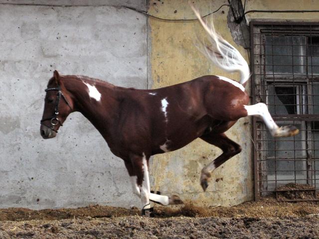 http://www.equestrian.ru/photos/user_photo/2008/8b5f87a9.jpg