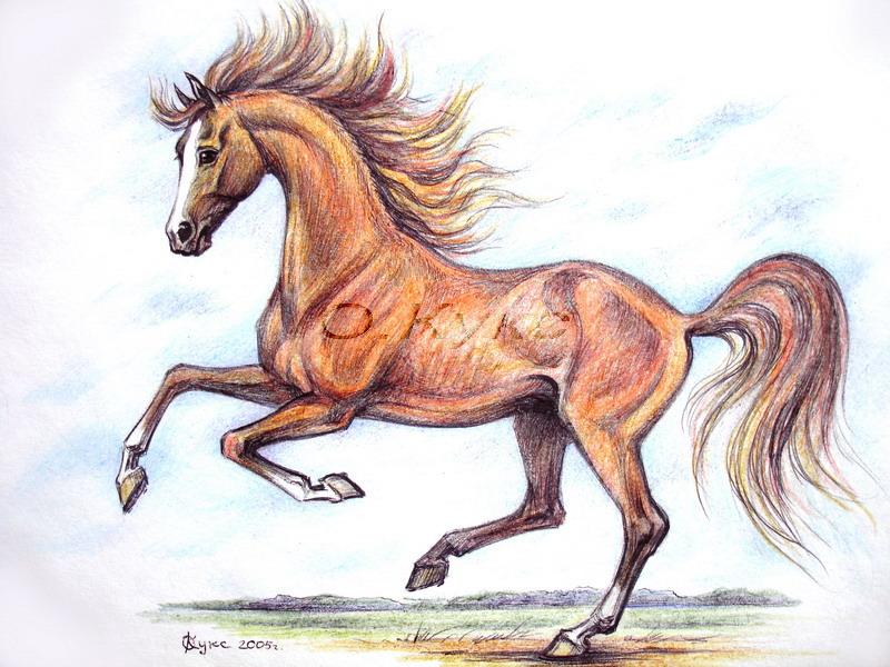 Отправить эл, картинки лошади карандашом цветные