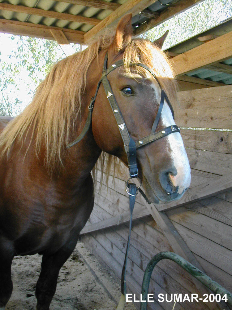 http://www.equestrian.ru/photos/user_photo/2008/9a0ed638.jpg