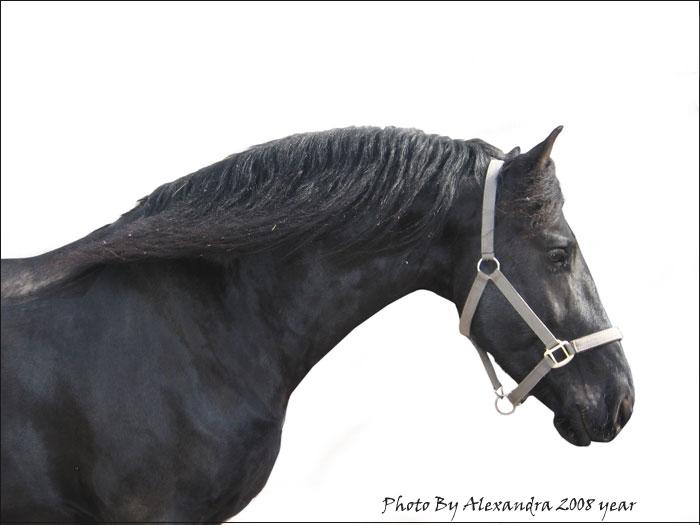 http://www.equestrian.ru/photos/user_photo/2008/9d732360.jpg