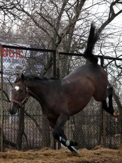 http://www.equestrian.ru/photos/user_photo/2008/a1901747.jpg